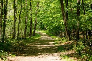 Gozdan cesta