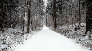 Zasnežena gozdna cesta