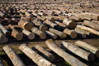 Dražba lesa 2020 foto: ZGS