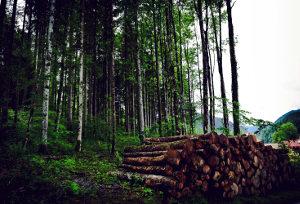 Gozd in hlodi