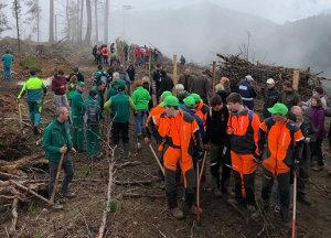 Prostovoljci pri pomlajevanju gozdov