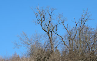 Golo drevje proti nebu