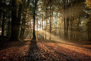 Slika gozda s sončnimi žarki