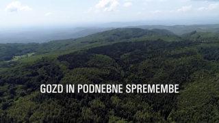 Gozd in podnebne spremembe