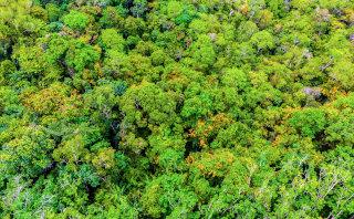 Gozd iz zraka