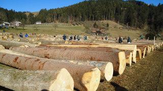 Hlodi na licitaciji vrednejšega lesa v Slovenj Gradcu.
