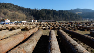 Hlodi na dražbi lesa 2021
