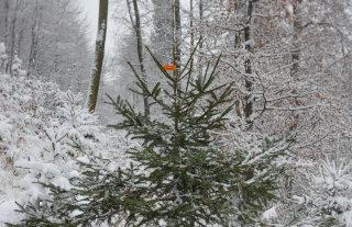 Okrasna smrečica v snegu z nalepko ZGS 2020