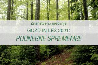 Posvet gozd in les