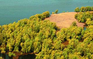 Gozd ob reki