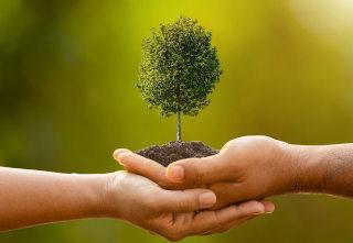 Roki ki držita drevo